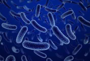 Formen und Methoden der Desinfektion. Physikalische und chemische Desinfektionsverfahren