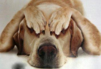 """""""Fospasim"""" dla psów – bezpieczny obrony przed stresem"""