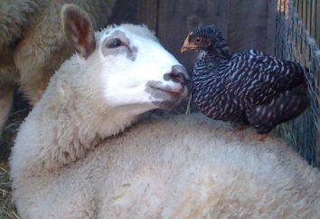 Comment communiquer les uns avec les autres animaux: langue, mouvement