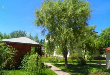 """Holiday Village """"Ludmila"""", Vityazevo: foto e recensioni"""