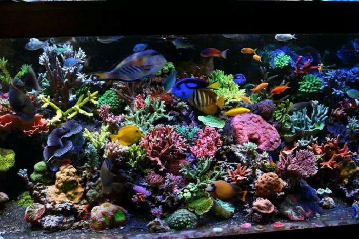 Les plus beaux poissons d 39 aquarium photo - Poisson a ventouse ...