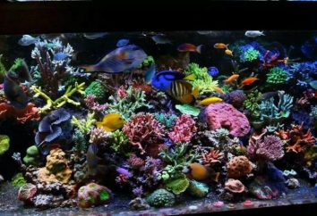 Les plus beaux poissons d'aquarium (photo)