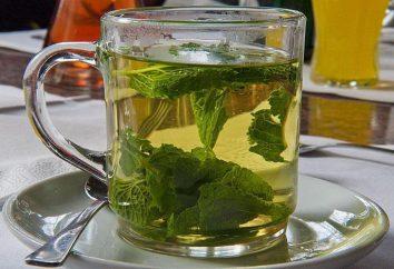 Piperita perdita di peso: ricette, proprietà, controindicazioni