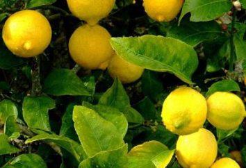 Lemon twarzy: aplikacja i opinie