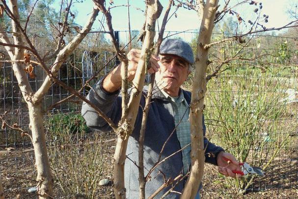 C mo y cu ndo podar rboles frutales correctamente c mo cortar los rboles frutales en primavera - Cuando se plantan los arboles frutales ...