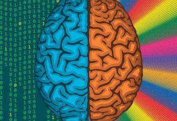 Ambidestria – o que é? Como desenvolver ambidexterity? Prós e contras de ambidexterity