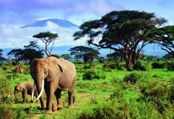 Estudamos o vulcão Kilimanjaro
