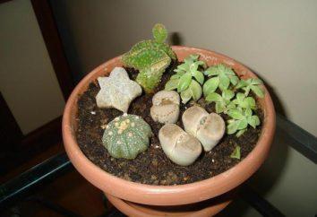 Che terra è necessaria per cactus?