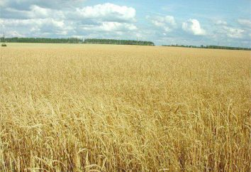 Jakie zmiany zaszły w własności ziemi? Prawa i obowiązki właścicieli