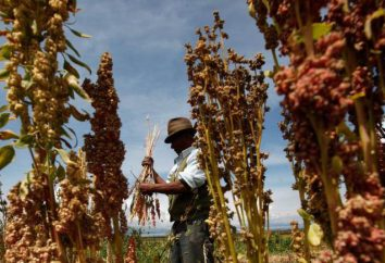Quinoa: Kalorien, einzigartige Eigenschaften