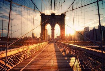 Staże w USA dla studentów i absolwentów: program, dokumenty wizowe