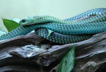 Najpiękniejsze węże świata