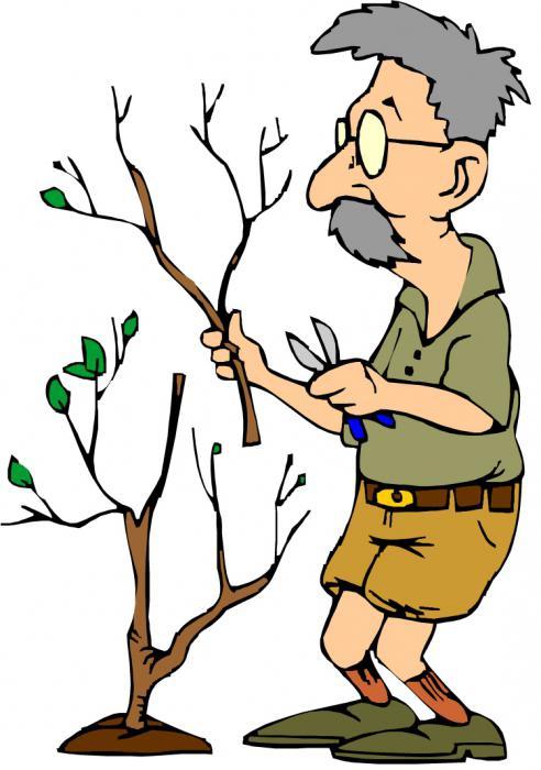 obstbäume schneiden mondkalender