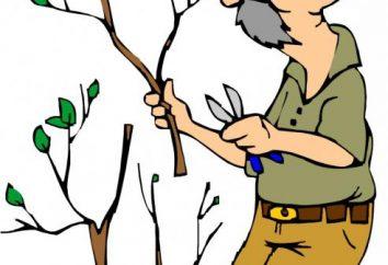 Jak wyciąć drzewa w ogrodzie. przycinanie drzew owocowych w okresie letnim i zimowym