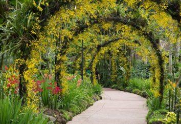 Arcos de flores do país, com suas próprias mãos