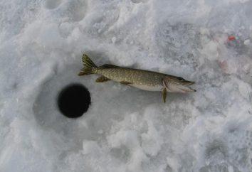 Pesca del invierno por lucio en zherlitsy. pesca del lucio en invierno: abordar y cebo para pesca de invierno