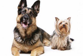 Co jest najmądrzejszy pies na świecie
