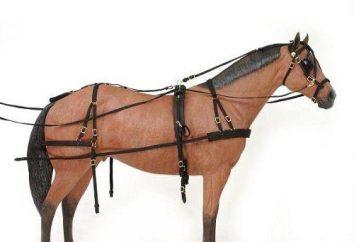 Kantar dla koni własnymi rękami. Uprząż dla koni