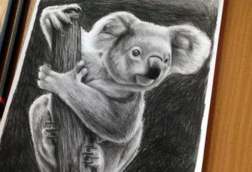 Jak narysować koala? Stopniowe opis