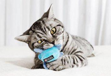 """Alimentos """"Purina Van"""" para gatos (Purina One): composição, análises"""