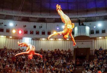 Kijów historia cyrku jako wspaniałej rozrywki w stolicy Ukrainy