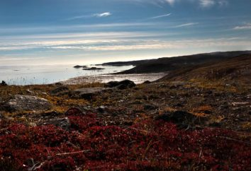Tundra – un área natural. breve descripción