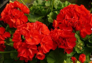 sala de flor con flores rojas para un buen estado de ánimo