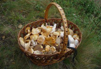 Jak sprawdzić trujący grzyb, czy nie, w domu?