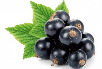 Groseille Black Pearl: une photo, une description de la variété, commentaires