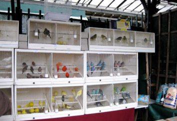 Quel meilleur marché des oiseaux à Krasnodar?