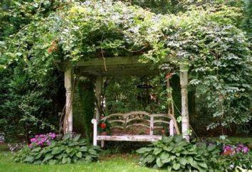 Węgorz – rośliny dla domu i ogrodu. Opis i zdjęcia