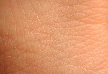 Was ist die Haut und ihre Bedeutung für den menschlichen Körper