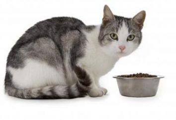 Hipoalergiczne cat: poglądy i opinie