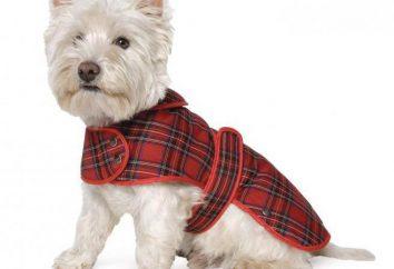 Końcówka psa dla psów: gatunek, przeznaczenie, produkcja własnymi rękami