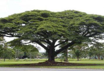 Le specie legnose più pregiate: Descrizione, tipi e usi