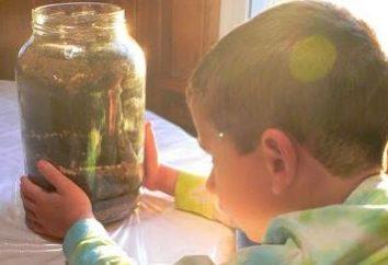 O trabalho experimental no jardim de infância