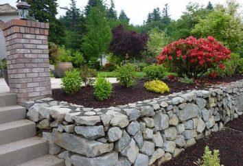 Comment faire une Parterre de fleurs dans le jardin de pierre avec leurs mains?