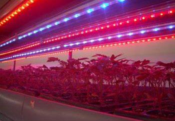 plante LED de la bande – un moyen économique pour éclairer