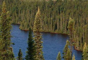 Qual è il clima nella zona di foresta della Russia?