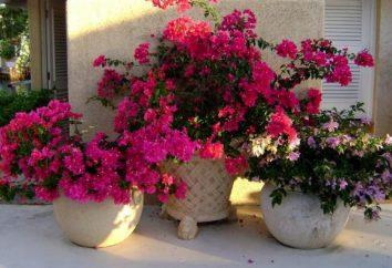 Come per fertilizzare le piante d'appartamento in inverno a casa?