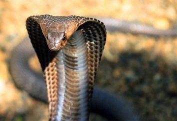 olio di serpente per capelli: recensioni