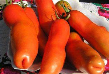 """Pomidor """"aura"""": opis odmiany, uprawy, recenzje"""