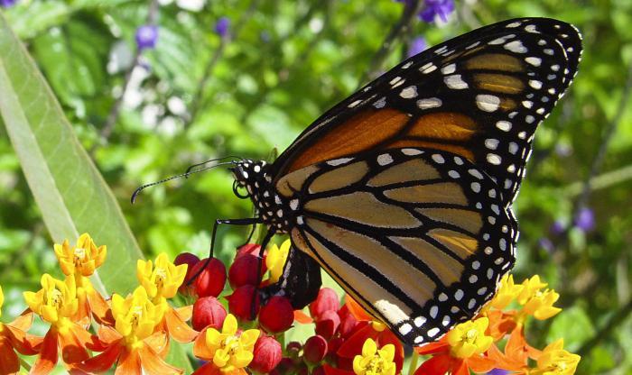 bedingungen die fotosynthese beeinflussen