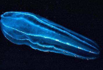Niesamowita seria: świecący plankton