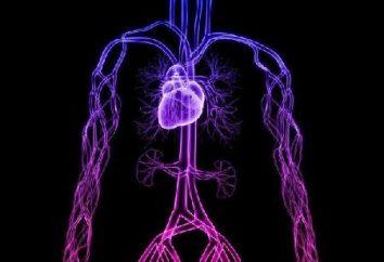 Les trois étapes de l'hypertension artérielle – prendre un peu de recul