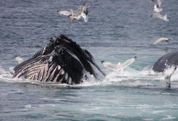Quando la Giornata Mondiale dei delfini e delle balene?