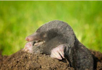 Qual è la profondità del foro della talpa? Come e in quale profondità la talpa scava la terra?