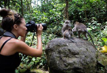 Attractions Indonésie: la description de la liste