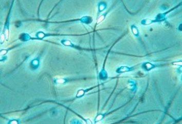 Czy wiesz, że w spermie wchodzi kwas cytrynowy?