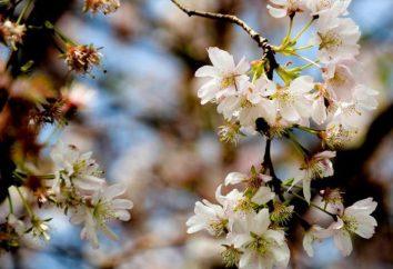"""Composizione su """"La primavera è venuta"""". Varianti di testi. Consigli per i principianti"""